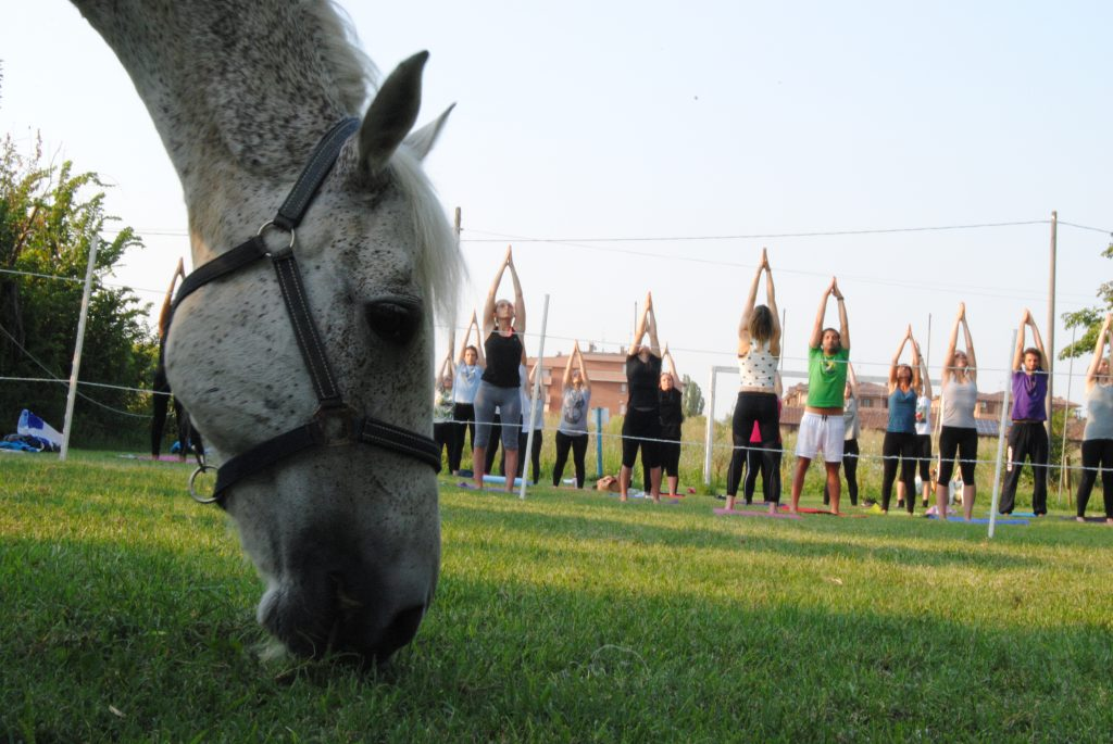 yoga e cavallo
