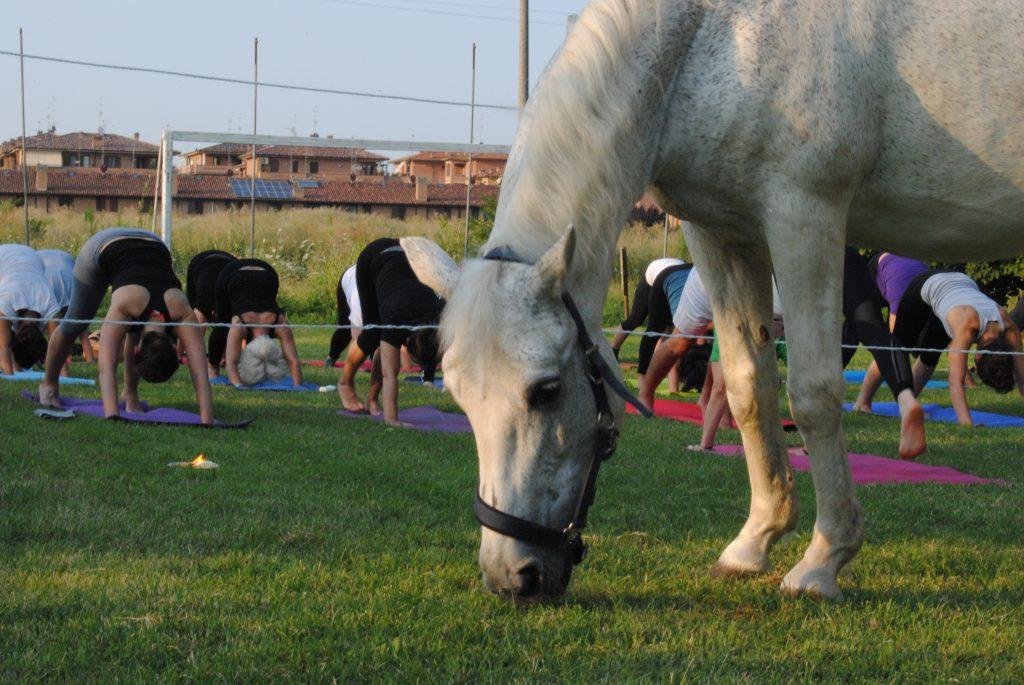 cavallo bruca con yogini