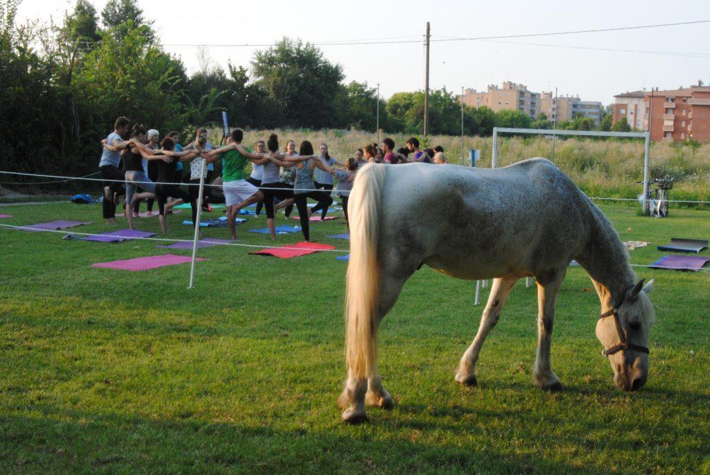 cavallo bruca con allievi yoga sullo sfondo