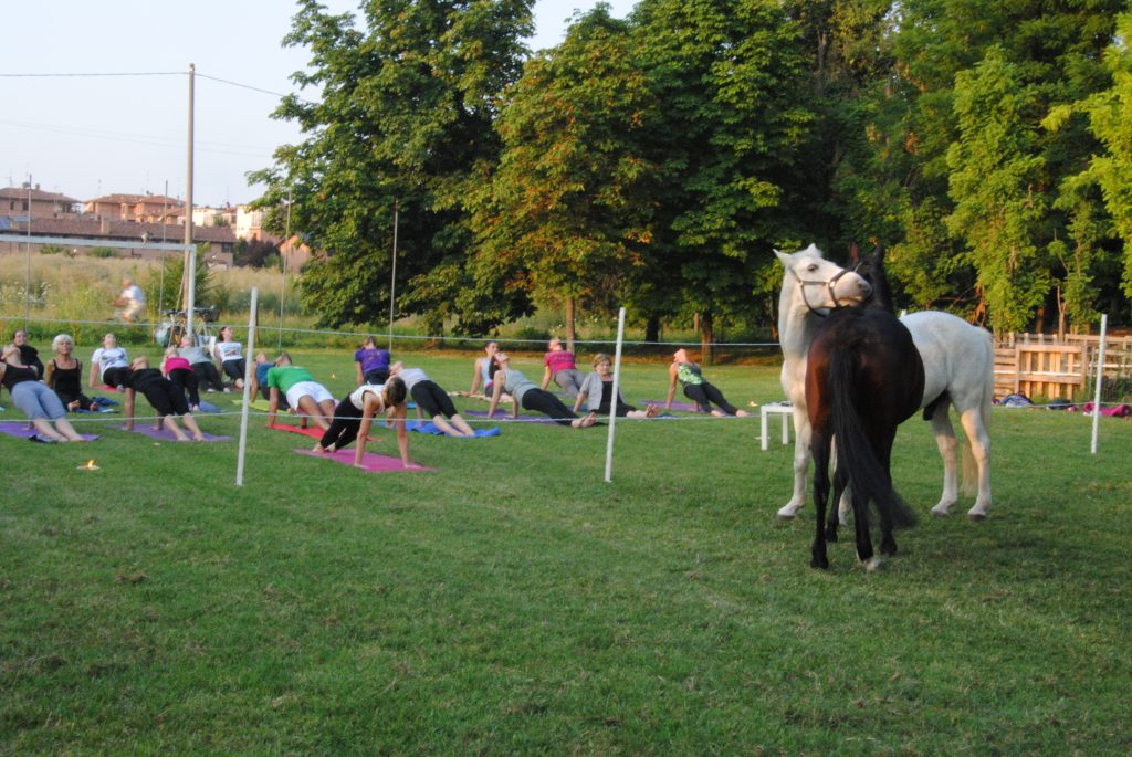 grooming cavalli con allievi yoga all'aperto